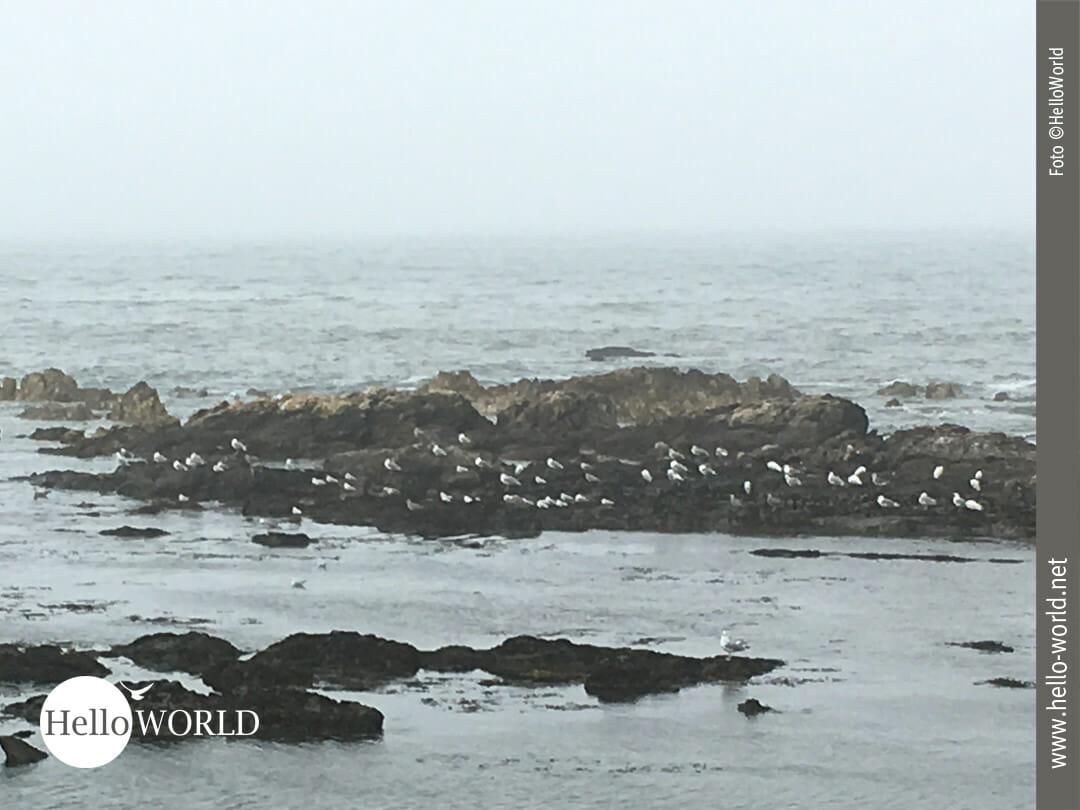 Raues Klima am Meer