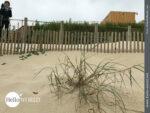 Holzpanele schützen die Dünen