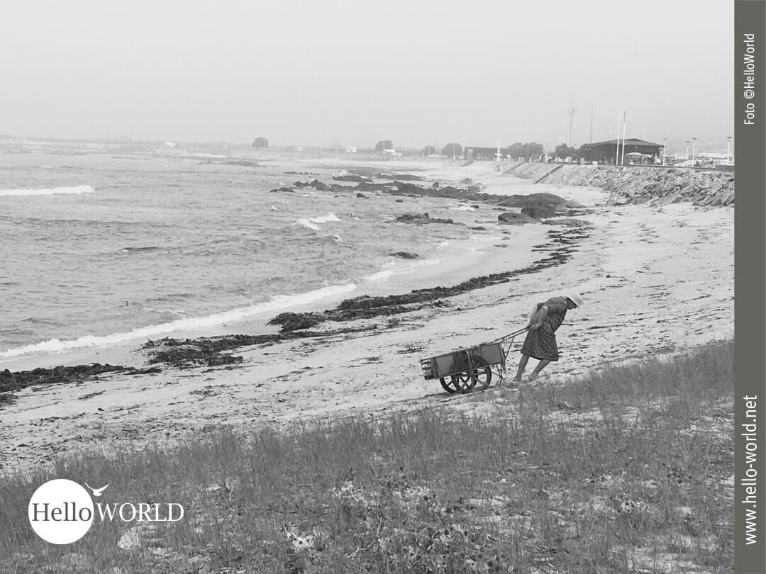 Dieses Bild wurde auf der Camino Portugues Etappe von Viana do Castelo nach Ancora aufgenommen und zeigt eine alte Frau am Strand, die einen Schubkarren hinter sich herzieht.
