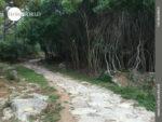 Märchenkulisse auf dem Camino Portugues