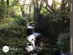 Natur pur auf dem Camino Portugues