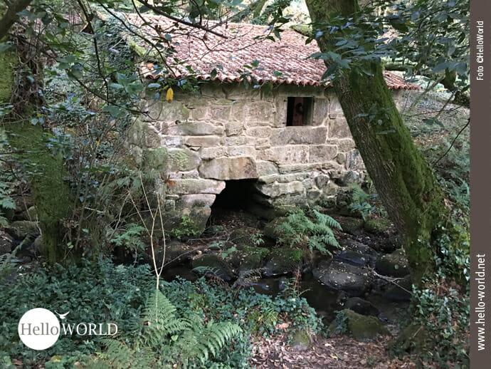 Auf dem Caminho Portugues führt der Weg an dieser gut erhaltenen Steinmühle vorbei, die mitten im Wald am Flussrand steht und von Bäumen und Farn umgeben ist.