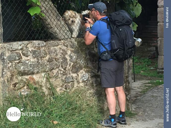 Begegnung mit Hunden auf dem Caminho Portugues