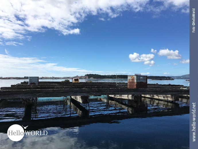 Dieses Bild vom Caminho Portugues zeigt eine Muschelbank aus der Nähe. Sie sieht aus wie ein großes Holzfloß auf dem verrostete Kisten stehen und Seile ins Wasser ragen.