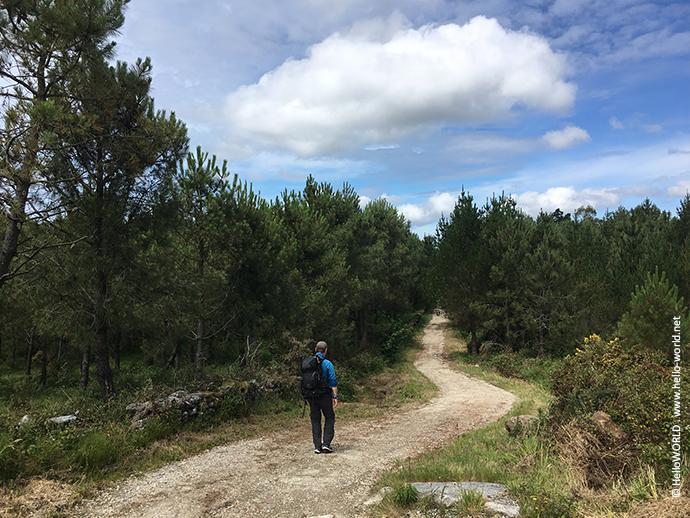 Das Bild zeigt einen Waldweg auf dem Camino Finisterre Richtung Cee, auf dem ein Mann mit Rucksack wandert.