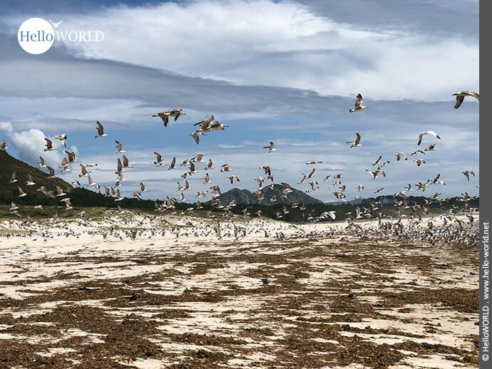 Zeit für den Abflug: Seevögel am Strand
