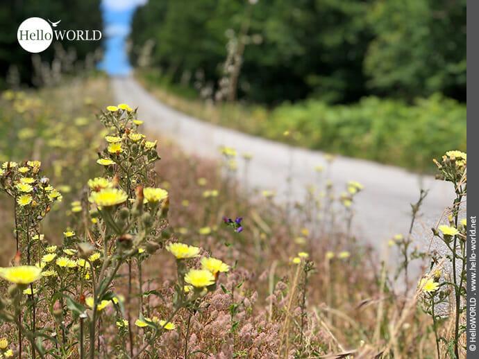 Am Rande des Weges stehen viele Blumen...
