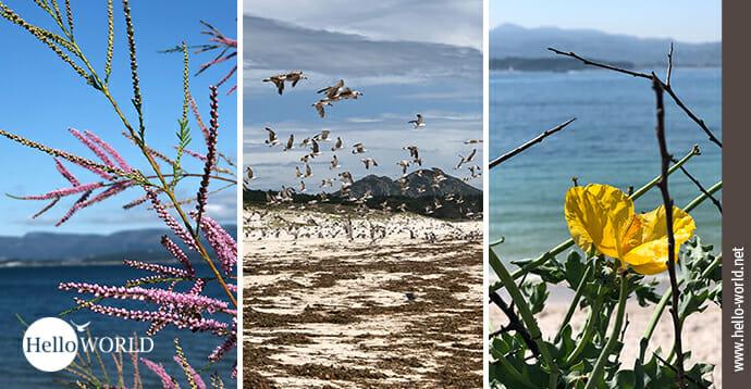 Titelbild zur Galerie Camino Portugues Küstenweg Bilder Flora und Fauna