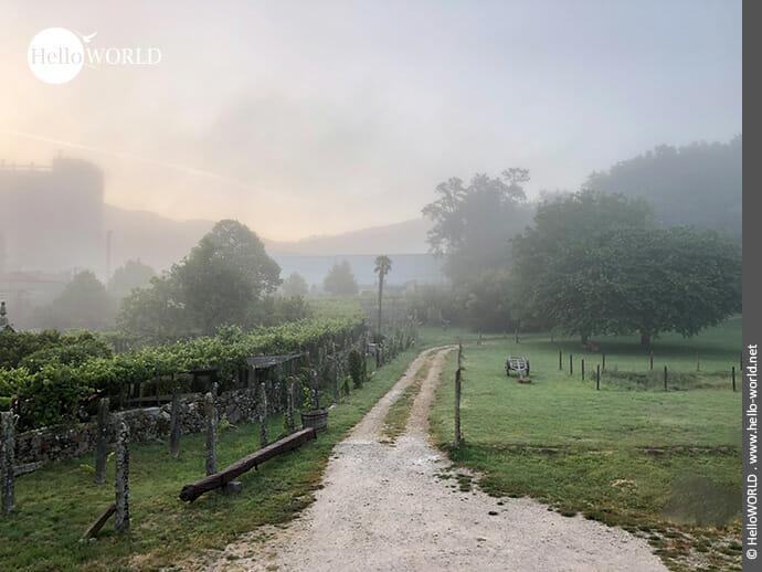 Seltsam ist es im Nebel zu wandern...