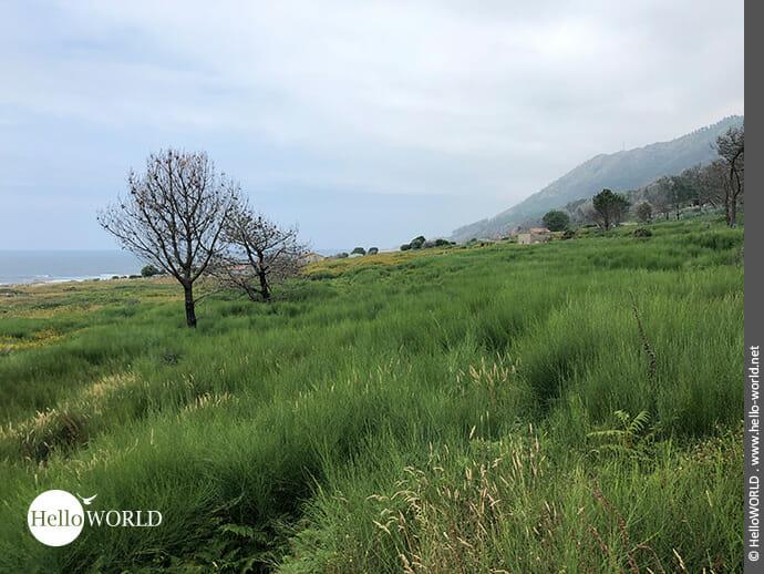 Aussicht auf die Landschaft beim Camino Portugues Rundwanderweg