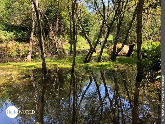 Spiegelbild der Vegetation
