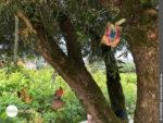 Baumschmuck auf dem Camino Portugues Rundwanderweg