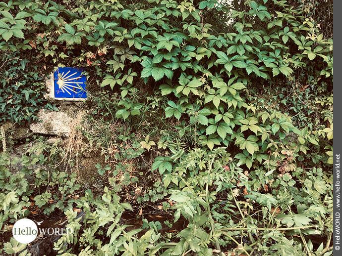 Typisches Bild eines Jakobswegzeichens auf dem Camino Portugues Rundwanderweg