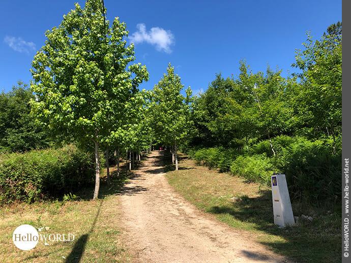 Kleine Baumallee auf dem Camino Portugues Central