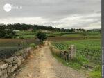 Landwirtschaftlicher Charme auf dem Camino Portugues Central