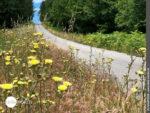 Der Camino Portugues Central von Blumen gesäumt