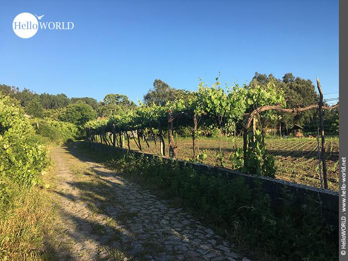 Ländliche Gebiete kennzeichnen den Jakobsweg Camino Portugues Central.