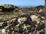 Gestrandet: Meeresbewohner an der Atlantikküste