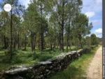 Angelegter Waldweg bei Figueiroa