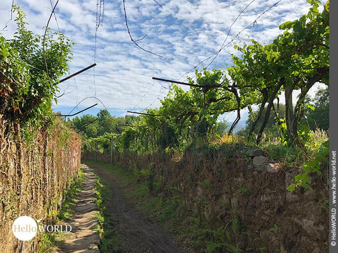 Es geht auch durch Weinanbaugebiete...