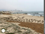 Aufgeräumt: Algen am Strand bei Povoa de Varzim