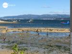 Ria de Arousa: Paradies für Muschelsammler und -liebhaber