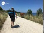 Freilaufend: Pferde auf dem Küstenweg in Galicien