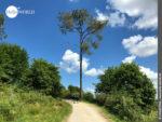 Perfekte Landschaft, perfekter Weg in Galicien