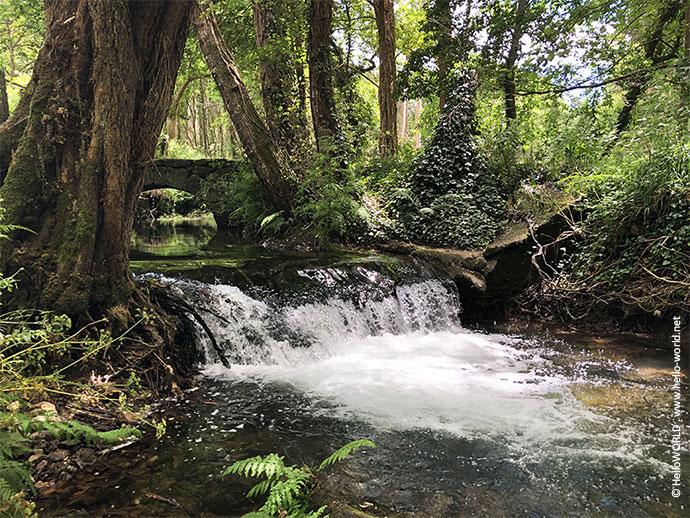 Das Bild zeigt einen Waldweg mit einem großen Bach und im Hintergrund eine Steinbrücke.