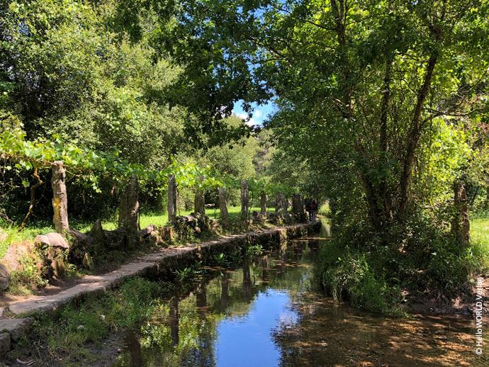 Auf diesem Foto sieht man Bäume und einen Bach im Naturgebiet As Gandaras y Rio Louro, das man auf dem portugiesischen Jakobsweg durchquert.