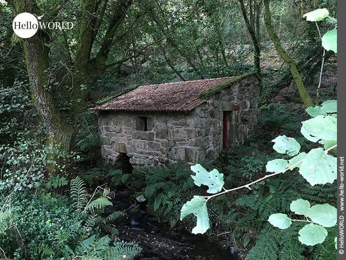 Durch den Wald am Bach entlang: Streckenabschnitt der Variante Espiritual