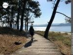 Holziger Untergrund auf dem Camino Portugues Küstenweg