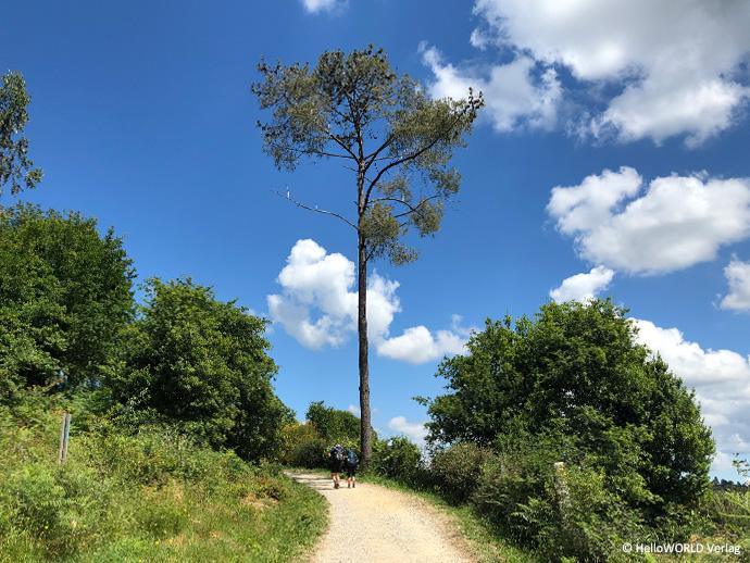 Auf diesem Bild sieht man zwei Pilger auf einem breiten unbefestigten Weg laufen, an dessen Ende ein Baum steht.