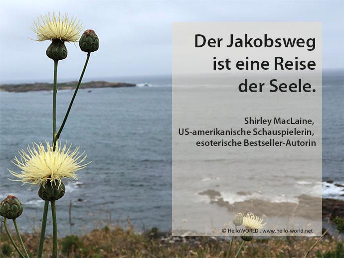 Dieses Foto aus der Jakobsweg-Zitate Sammlung zeigt eine Blume und einen Spruch von Shirley MacLaine