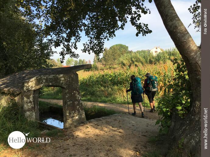 Abwechslungsreiche Pilgerstrecke über Wald und Felder