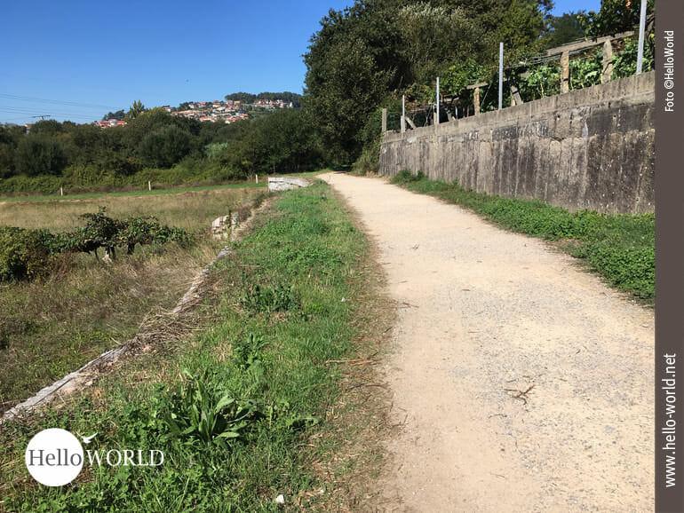 Auf dem Caminho Portugues über Feldwege unterwegs