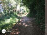 Der Camino Portugues von seiner grünen Seite