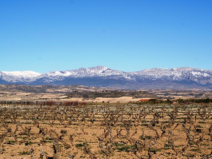 Blick auf das Weinanbaugebiet La Rioja durch das der Camino Frances in Spanien führt.