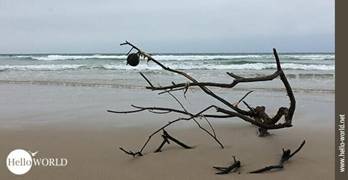 Dieses Bild zeigt einen abgebrochenen Ast am Stand des Atlantiks