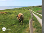 Landwirtschaftliche Wege an der Küste