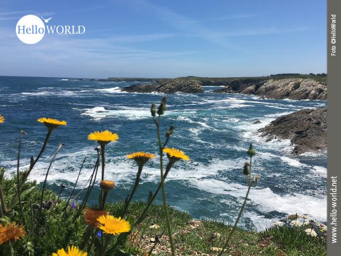 Blühende Aussichten auf dem Küstenweg