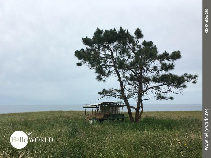 Einsamer Heuwagen in bester Küstenlage