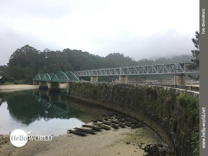 Gut geschützt: Austernbänke nahe einer Brückenmauer