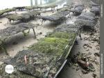 Austernzucht an der Ria del Barqueiro