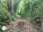 Waldstrecke an der spanischen Nordküste