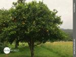Fruchtiges Landleben an der spanischen Nordküste