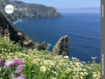 Sommerwiese am Cabo Ortegal