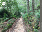 Schmale Waldpfade sorgen für Abwechslung