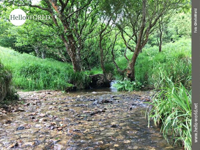 Alternative auf dem Küstenweg: Bachlauf anstatt Asphalt