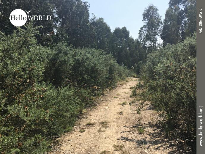 Waldweg zwischen A Coruna und Arteixo